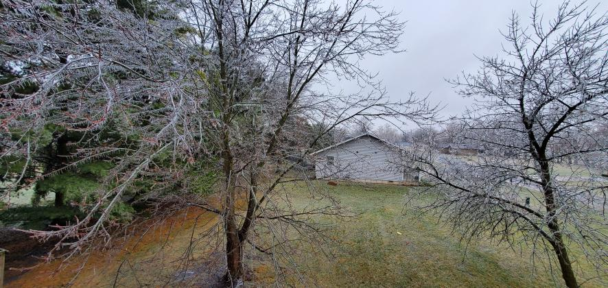 Ice-covered tree in Ashland. (Photo by Michael Kloppenburg)