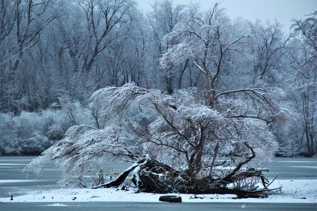 Ice and snow cover this tree at the Beardstown Marina on Sunday following the snow on Saturday night. (Photo by D. Miller)